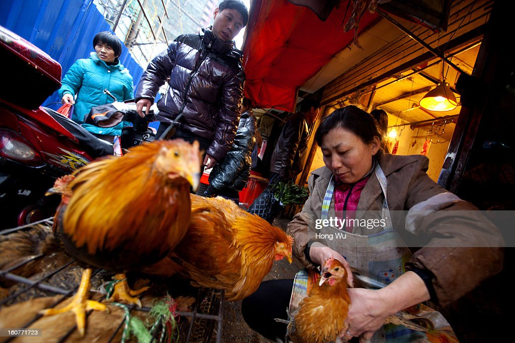 A Chinese vendor selects a cock for buyer at an outdoor market on February 5, 2013 in Shanghai, China. Chinese citizens are stocking up on food ahead of the upcoming Chinese Lunar New Year, also known as Spring Festival, is one of the most important festivals in China and falls this year on February 10, 2013.