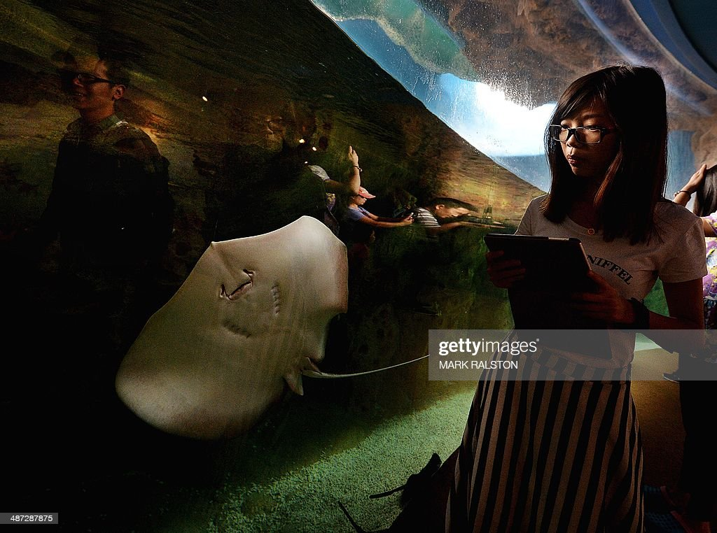 A Chinese woman looks at a juvenile stingray on display at the Chimelong Ocean Kingdom in Zhuhai on April 29, 2014. The park which claims to be the world's largest ocean theme park was built at an estimated cost of USD3.3 billion and opened in March of this year. AFP PHOTO/Mark RALSTON