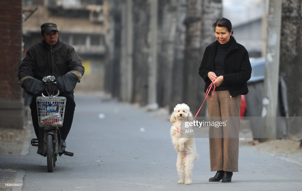 A Chinese woman stands along a road with her dog at a residential community in Beijing on March 11, 2013. Regulations in Beijing and other major Chinese cities ban residents from keeping large dogs in downtown areas, but rules are sometimes flouted.