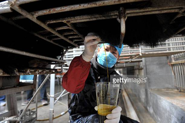 Chinese workers collect bear bile at one of the traditional Chinese medicine company Guizhentang's controversial bear bile farms in Hui'an southeast...