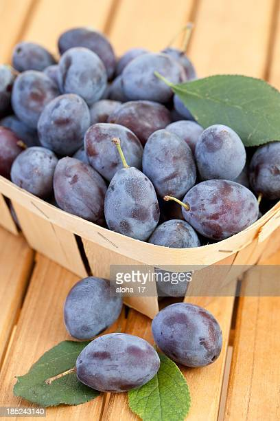 Chip basket filled with organic damson plums (Prunus insititia)