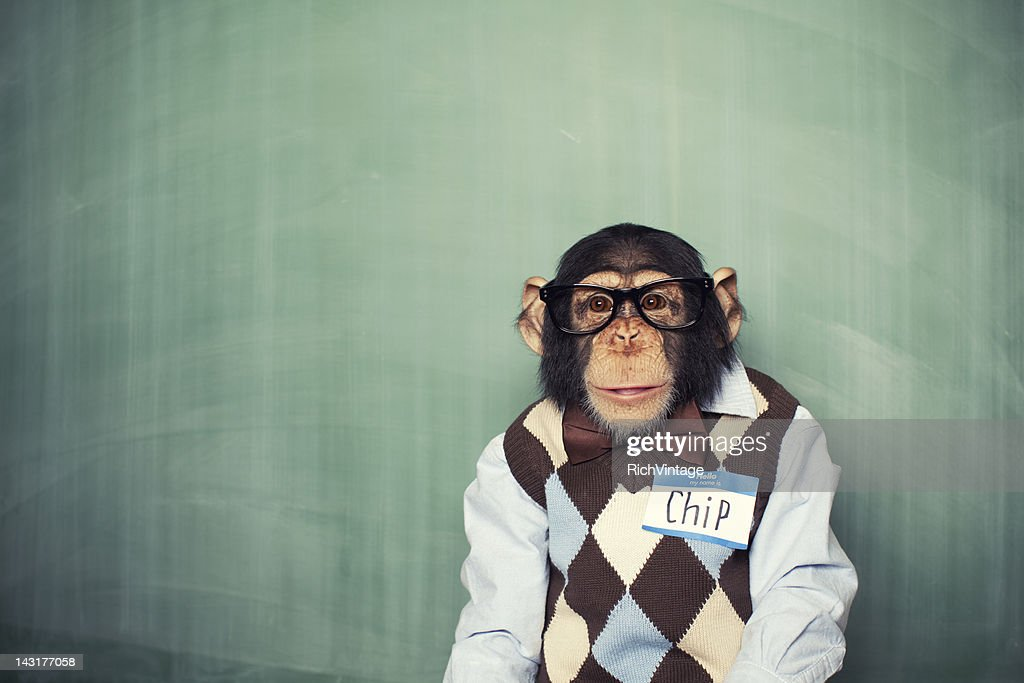 Chip the Chimp : Stock Photo