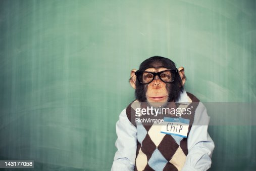 Chip the Chimp : Foto de stock