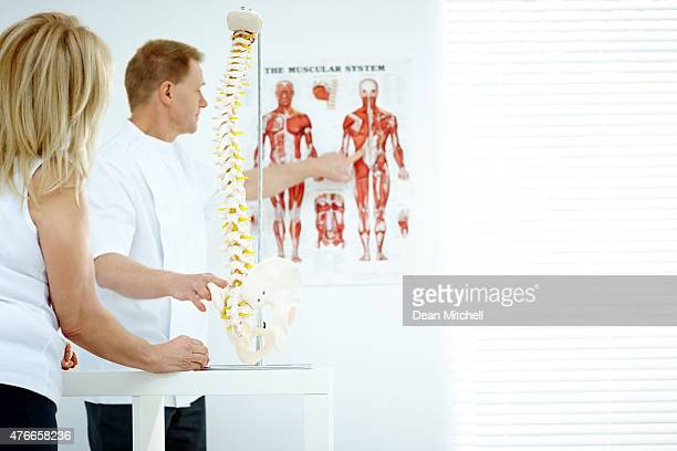 Chiropractor explains patient using chart and model