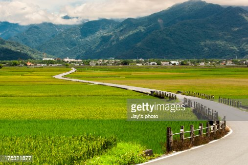 Chishang rice field Taiwan