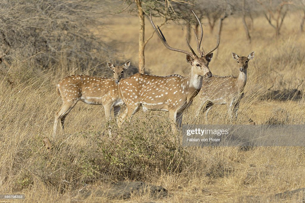 essay on gir national park The gir national park is a wildlife sanctuary in junagadh, gujarat for shorter visits, the gir interpretation zone, at devalia, 12 km west of sasan gir, has some lions in captivity, but this is not the same as visiting them in the wild.