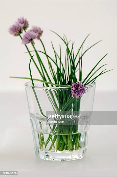 Chives in glass, close-up