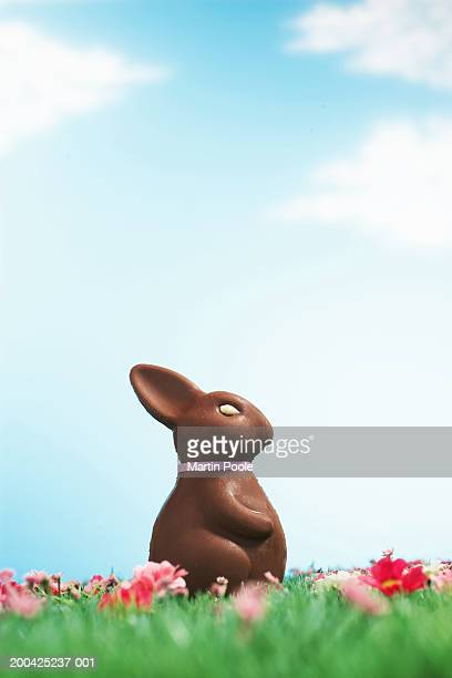 Chocolate Easter bunny amongst flowers in grass, side view