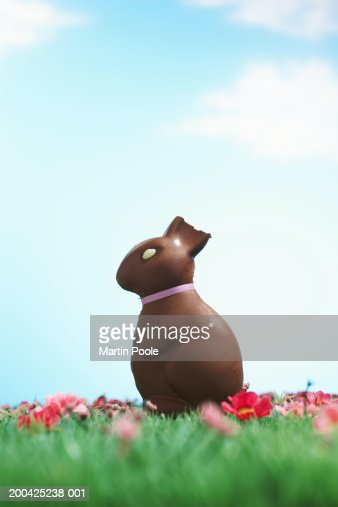 Chocolate Easter bunny with half of ear bitten off sitting on grass : ストックフォト
