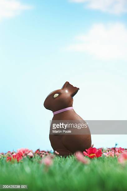 Chocolate Easter bunny with half of ear bitten off sitting on grass