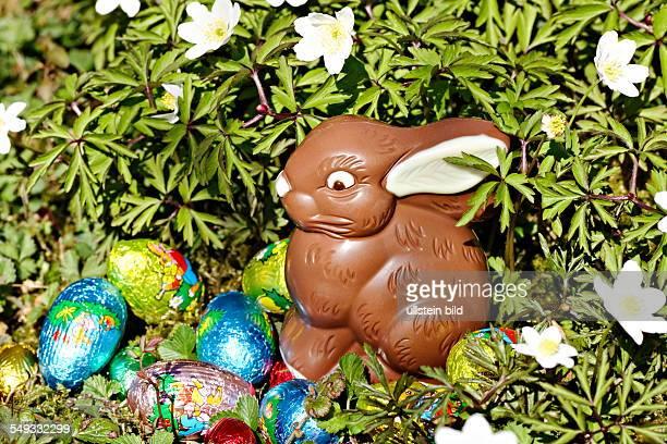 Chocolate easter rabbit in garden