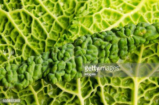 Chou vert, Feuille, Goutte : Stock Photo