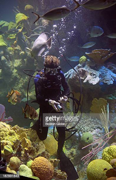 Chris Bauernfeind who dives for a living in the New England Aquarium's Giant Ocean Tank Now that the tank is brand new and bigger and has a lot more...
