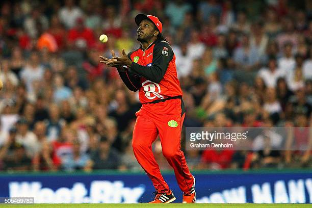 Chris Gayle of the Renegades takes a catch to dismiss Tim Ludeman of the Strikers during the Big Bash League match between the Melbourne Renegades...