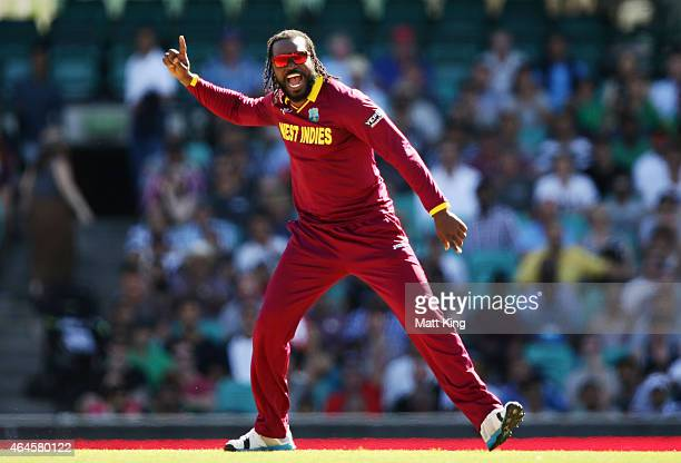 Chris Gayle of West Indies celebrates taking the wicket of FHashim Amla of South Africa during the 2015 ICC Cricket World Cup match between South...
