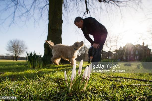 Chris Hanson and his dog Aflie stand behind spring flowers starting to bloom on The Stray Harrogate North Yorkshire