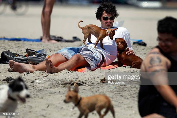 Chris Kanis relaxes on Rosie's Dog Beach in Long Beach while his dog Peanut a Chihuahua mix defends its turf against the bigger Lucy a mini dachshund...