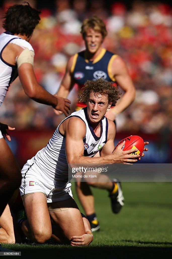 Chris Mayne of the Dockers wins the ball during the round six AFL match between the Adelaide Crows and the Fremantle Dockers at Adelaide Oval on April 30, 2016 in Adelaide, Australia.