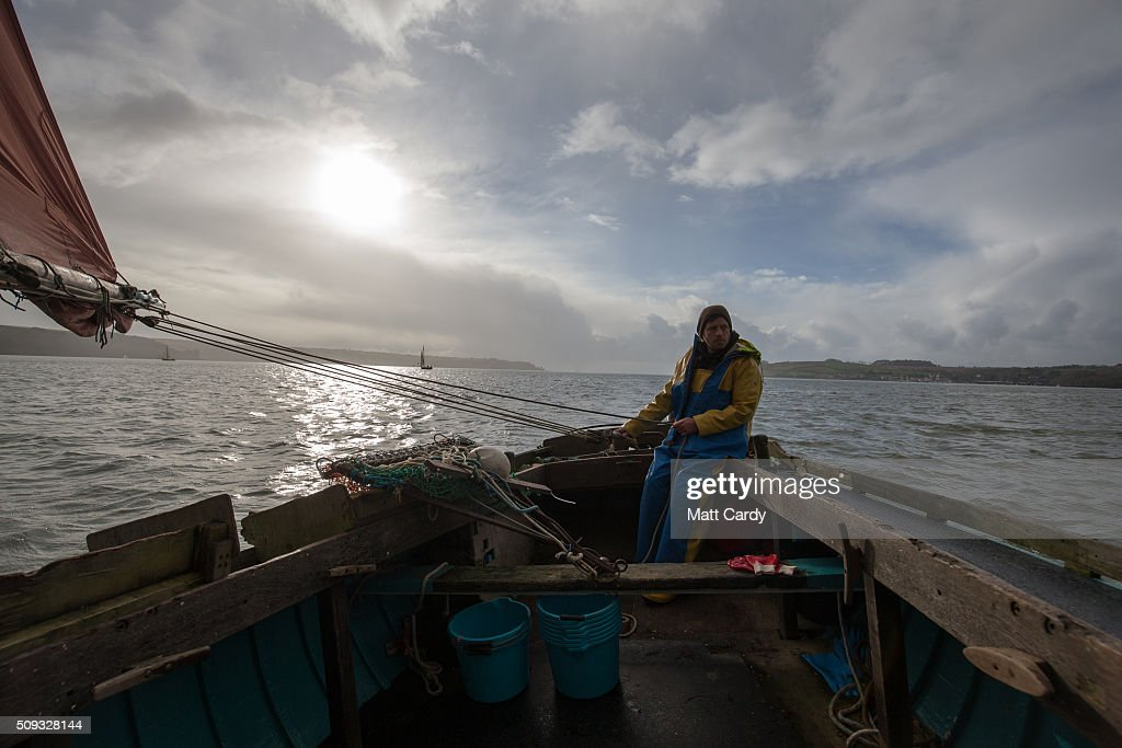 Chris Ranger sails his original wooden river oyster sail boat, the Alf Smythers in the Fal Fishery on the River Fal, to gather wild native Fal oysters near Falmouth February 9, 2016 in Cornwall, England. Since the end of 2015, Ranger who runs Fal Oysters Ltd, has been able to claim European Union protected designation of origin (PDO) status to the oysters he gathers in the River Fal. The protection, which has already been awarded to producers of the Cornish Pasty, Stilton cheese, Shetland lamb and Jersey royal potatoes, is given to cover foodstuff that is produced, processed and prepared in a given geographical area using recognised know-how. The Fal Fishey is said to be the last oyster fishery in Europe that still harvests under sail meaning that the Fal Oysters, that have a distinctive taste and are characterised by their round or uneven round shells with light brown or bluish concentric bands on their outer surfaces, have been collected in more of less the same way for more than 500 years.