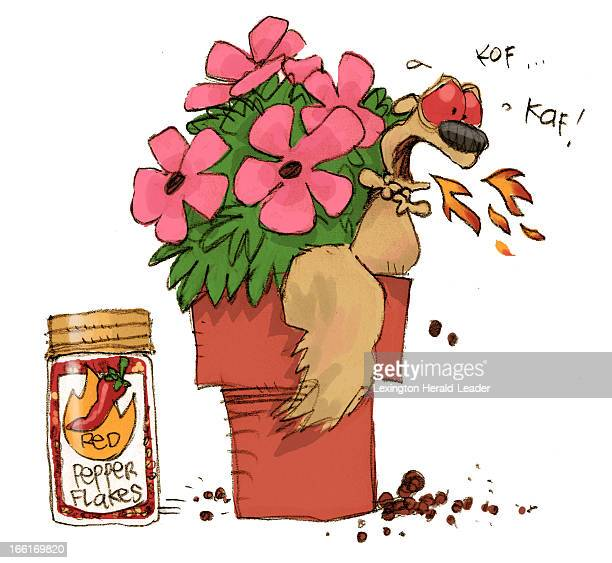 Chris Ware illustration of squirrel gagging after eating flower sprinkled with red pepper flakes can be used with stories about garden pests