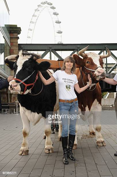 Chrissie Hynde attends a photocall to launch 'Cows and the Earth A Story Of Kinder Dairy Farming' at Southbank Centre on October 27 2009 in London...