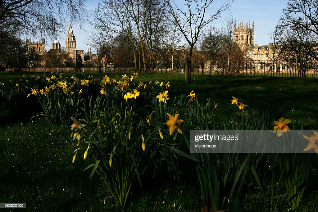 Christ Church College Oxford to the left and Merton College Oxford on the right photographed through spring daffodils Affectionately named 'the city...
