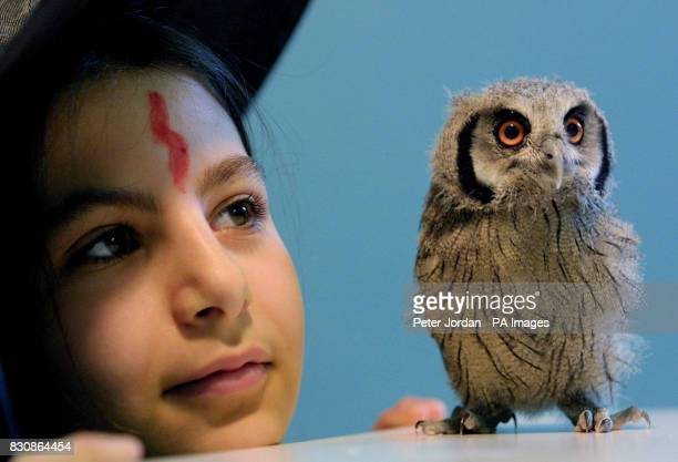 Christina Nicou year 6 of Calton Primary School north London with one of three baby owlets who's mother died shortly after they were born at London...