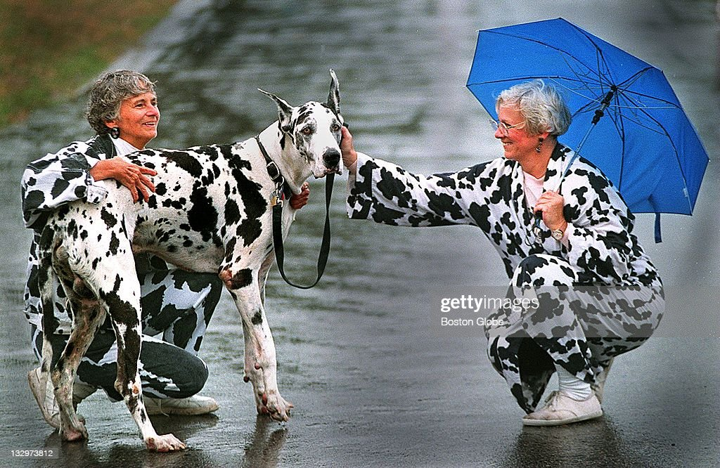 Christine Darcy left and her sister Cynthia Hickson right fuss over Big Jay a Harlequin Great Dane during the MSPCA's 'Mutts 'n' Fluff 'n' Stuff Day'...