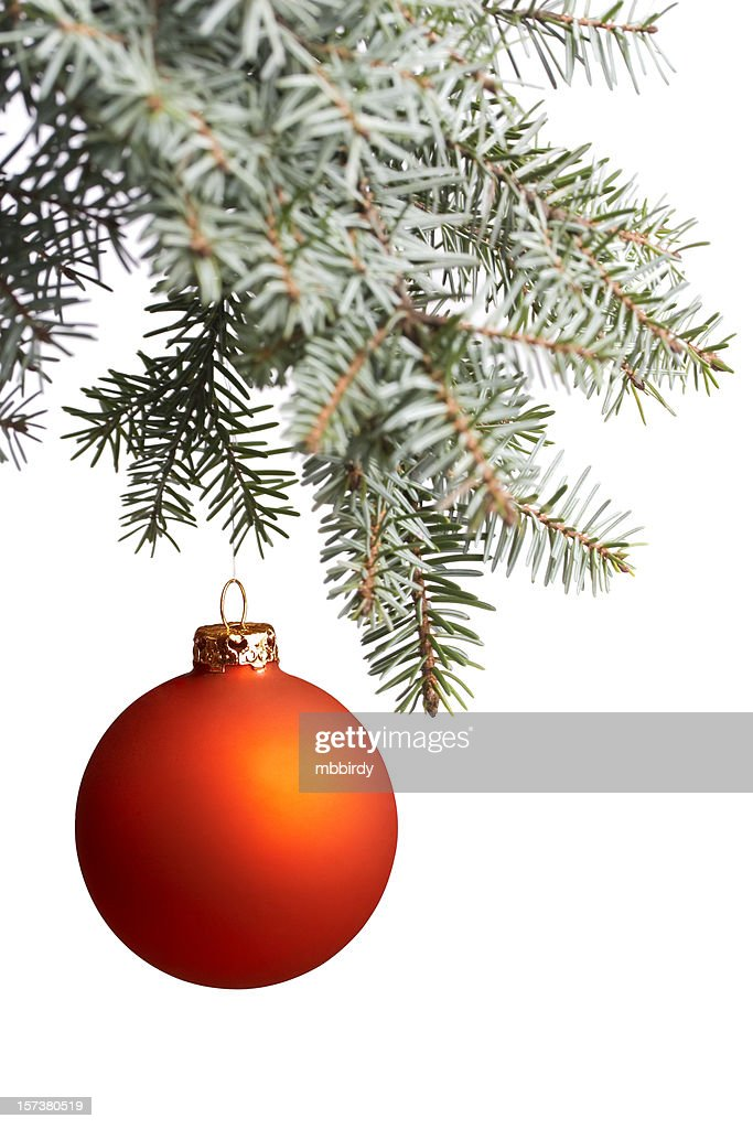 Christmas ball on spruce branch, isolated : Stock Photo