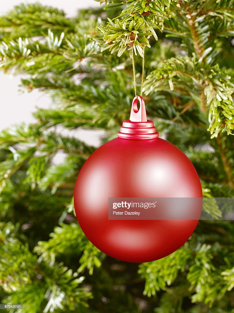 Christmas bauble on Christmas tree upright. : Stock Photo