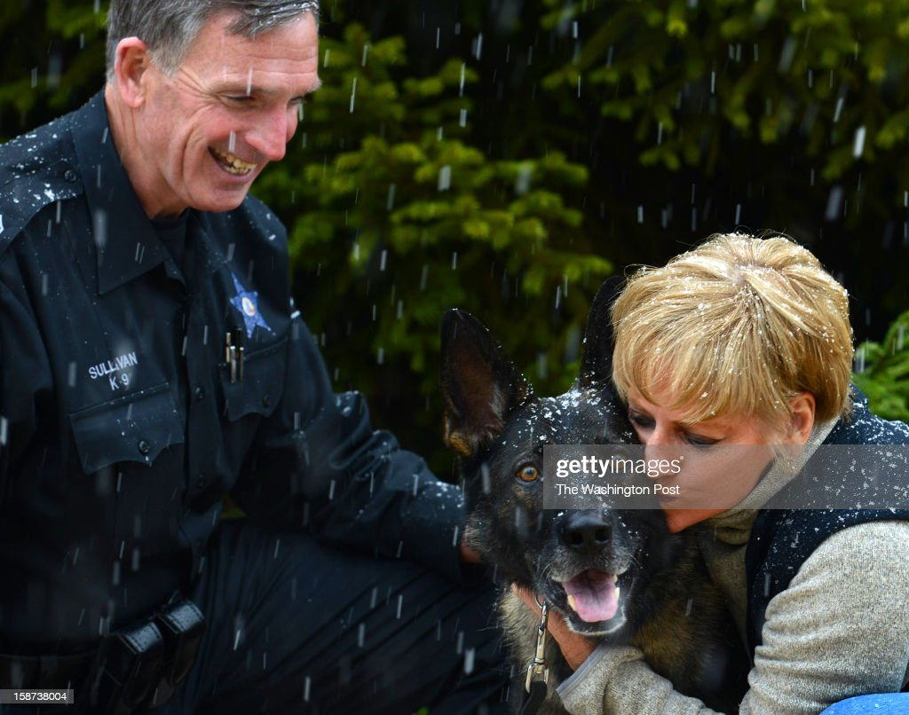Christmas came early for Loudoun County Master Dep. Raymond Sullivan, his wife Tarra and his assigned K-9 Dog Bronco in Dulles, VA on December 24, 2012. Bronco, a German shepherd, escaped Friday afternoon from a groomer near downtown Leesburg, VA. Using social media and pinpointed automated calling, the Sheriff's office put out the word looking for the dog. Numerous tips came in from the public until someone found him about nine miles away near the town of Hamilton, VA. He was found with a blank stare on his face, very dehydrated and physically run down with sore paw pads. And he lost eleven pounds since he escaped and was taken to a vet to be checked out before being sent home with the Sullivans to recuperate. The officer and his wife say they searched for Bronco night and day getting only a couple hours sleep over two days until Bronco was found. Mrs. Sullivan was handing out his picture in neighborhoods in hopes of finding him. For now, he's relaxing with Tarra at home until he's in good enough shape to return to work. Deputy Sullivan however, was back to work today and relieved that he was found safe and sound. He said, 'We're very lucky he was found'. The Sheriff Mike Chapman credits local residents for Bronco's return for spreading the word and offering help to locate the dog. Bronco was born in Hungary, trained as a Patrol/Narcotics dog and joined the Loudoun County Sheriff's Office in April 2009.