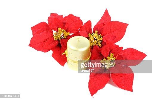 Christmas decor flowers : Stock Photo