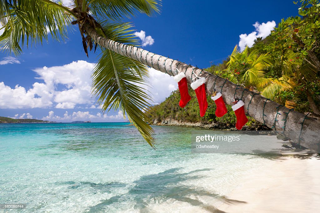 christmas decorations on a palm tree at the caribbean beach stock photo - Palm Tree Christmas Tree