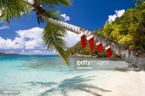 christmas decorations on a palm tree at the caribbean beach stock photo getty images - Christmas Tree Palm