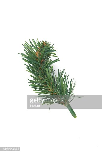 Christmas decorations. : Stock Photo