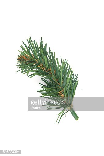 Christmas decorations. : Stock Photo