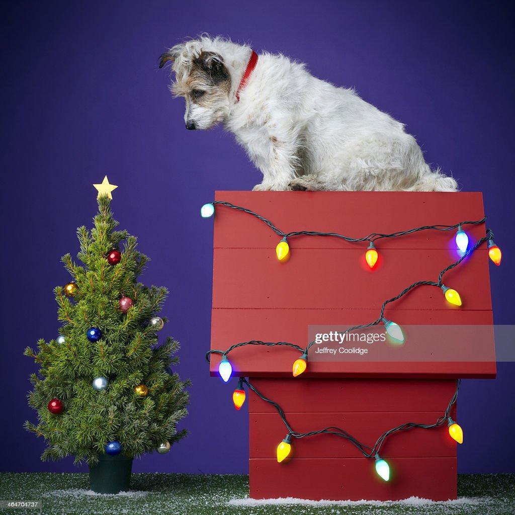 Christmas Dog 2012 : Stock Photo