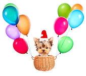 christmas dog as santa flying in a basket with air balloons