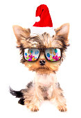 christmas dog as santa with party glasses on a white background
