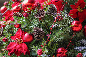 Christmas Flowers, Red Poinsettias with green leaves, red ornaments, pine cones. Seasonal background for greeting cards. Horizontal.