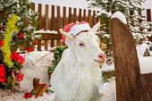 Christmas goat at the Christmas tree in a festive cap