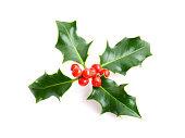 Christmas holiday holly decoration isolated on white background