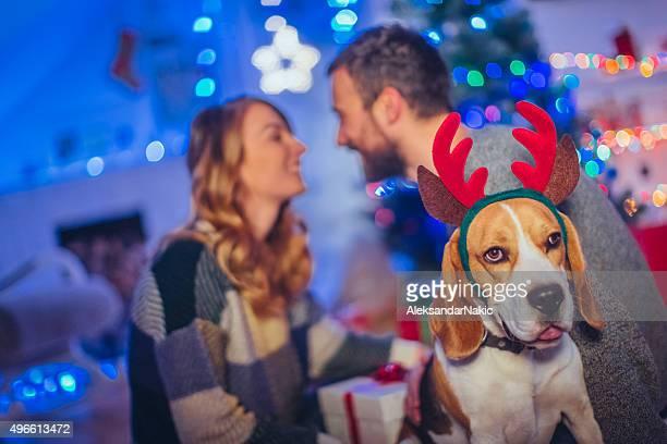 Weihnachten mit meinem Menschen