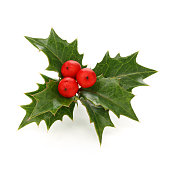 christmas holly berry leaves, chritmas icon isolated on white background