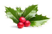 Christmas holly leaves decoration with red berries.