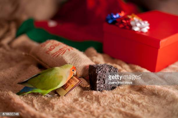 Christmas in Spain. Pet