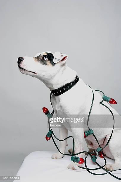 Christmas Jack 0020