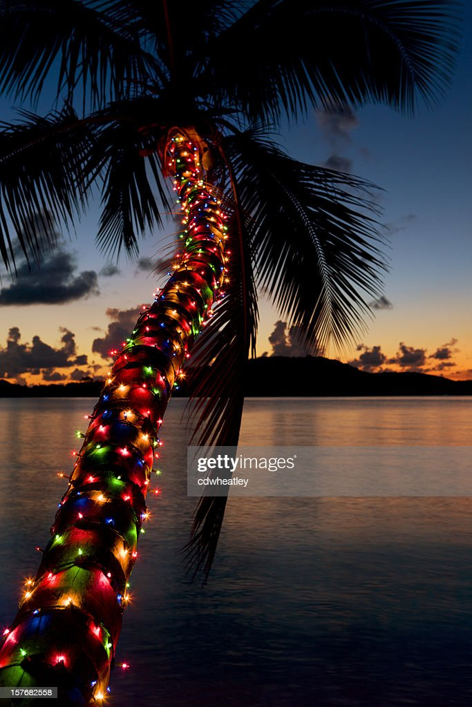 christmas lights on palm tree at a caribbean beach stock photo - Palm Tree With Christmas Lights