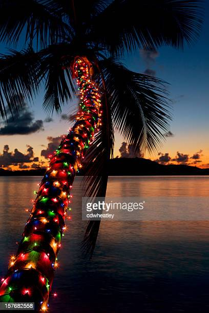 Christmas lights on palm tree at a Caribbean beach