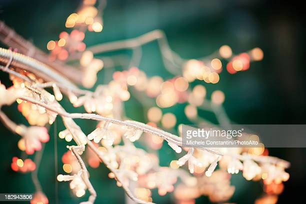 Christmas lights on tree branches